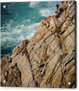 Point Lobos California Acrylic Print