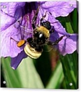 Pollination 2 Acrylic Print
