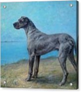 Portrait Of A Great Dane Acrylic Print