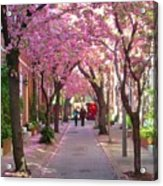 Prettiest Street In Philadelphia Acrylic Print