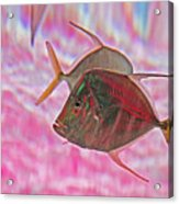 Pretty Fishy, Fish, 6, Multi-color, Pink Backgroun7 Acrylic Print
