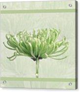 Pretty In Green Acrylic Print