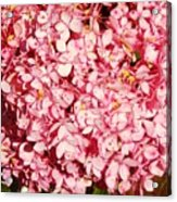 Prettiest Pink Acrylic Print