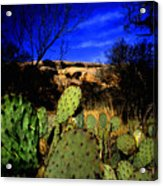 Prickly Pears Enchanted Rock Texas Acrylic Print