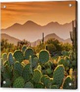 Pure Sonoran Gold  Acrylic Print