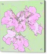 Purple And Green Acrylic Print