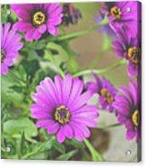 Purple Aster Flowers Acrylic Print