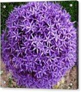 Purple Globe Acrylic Print