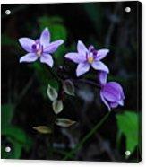 Purple Orchids 2 Acrylic Print