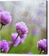 Purple Spring 7 Acrylic Print