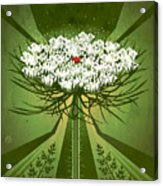 Queen Anne's Lace Print Acrylic Print
