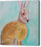 Rabbit Illustration Acrylic Print