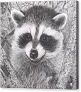 Raccoon Kit Acrylic Print