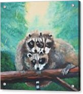 Racoons Acrylic Print