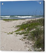 Railroad Vine And Sea Oats On The Atlantic In Florida Acrylic Print