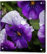 Rain Drops In The Morning Acrylic Print