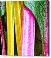 Rainbow Chard Acrylic Print