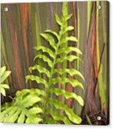 Rainbow Eucalyptus And Fern Acrylic Print