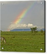 Rainbow Over The Masai Mara Acrylic Print