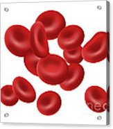 Red Blood Cells, Illustration Acrylic Print