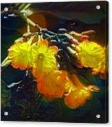Red Flower On Dark Sky Acrylic Print