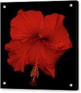 1- Red Hibiscus Acrylic Print