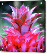 Red Pineapple Acrylic Print