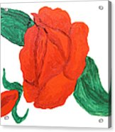 Red Rose, Oil Painting Acrylic Print