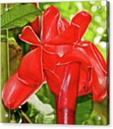 Red Tropical Flower In Huntington Botanical Gardens In San Marino-california Acrylic Print