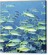 Reef Scene Acrylic Print