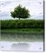 Reflecting Tree Acrylic Print