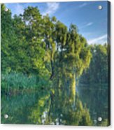 Reflections Of A Weeping Willow Acrylic Print