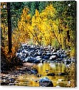 Reflections Of Gold Acrylic Print