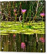 Reflective Wild Water Lilies Acrylic Print