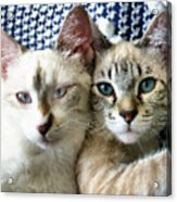 Rescued And Spoiled Acrylic Print