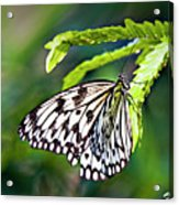 Rice Paper Butterfly 7 Acrylic Print