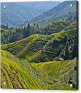 Rice Terraces In Guilin, China  Acrylic Print