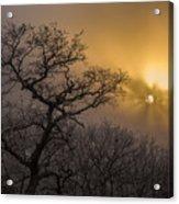 Rime Ice And Fog At Sunset - Telephoto Acrylic Print