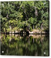 River In The Jungle Acrylic Print