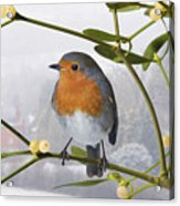 Robin On Mistletoe Acrylic Print