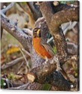 Robin On Cut Down Tree Branch Acrylic Print