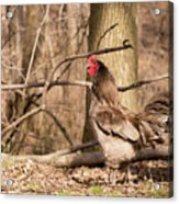 Rooster In The Woods Acrylic Print