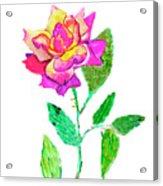Rose, Watercolor Painting Acrylic Print
