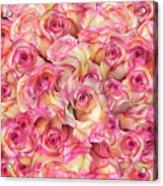 Roses Background Acrylic Print