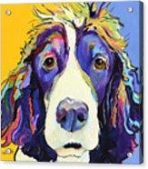 Sadie Acrylic Print by Pat Saunders-White