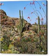 Saguaro National Park East Scene Iv Acrylic Print