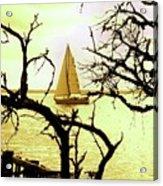 Sailboat Golden Sunset Acrylic Print