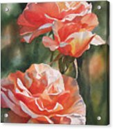 Salmon Colored Roses Acrylic Print by Sharon Freeman