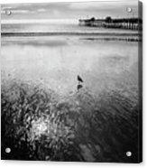 San Clemente Pier Acrylic Print by G Wigler