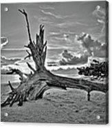 Sanibel Sunrise Acrylic Print